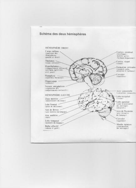 cerveau-humain-1.jpg